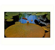 Golden lily pad Art Print
