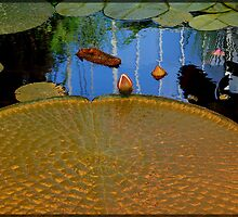 Golden lily pad by Nerina Stephens-Johnson