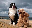 Love a Good Breeze by annibels