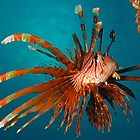 lion fish by Carle Parkhill