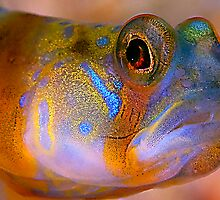 goby by Carle Parkhill