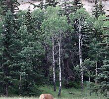 Grazing Elk by Alyce Taylor