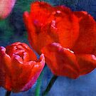 Red Tulips.... by Patriciakb