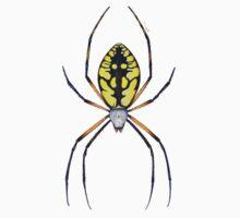 Argiope Spider Kids Clothes