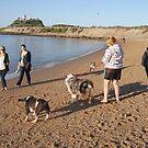 Dog Beach by smithrankenART