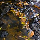 Autumn Shade by Shelley Warbrooke