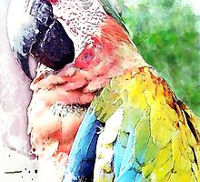 Catalina Macaw by William Martin