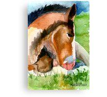 Clydesdale Foal Horse Portrait Canvas Print