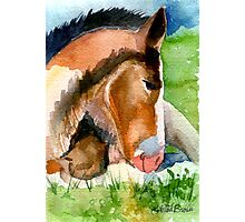 Clydesdale Foal Horse Portrait Photographic Print