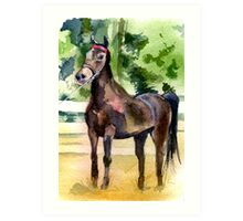 Morgan Horse Portrait Art Print
