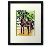 Morgan Horse Portrait Framed Print