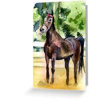 Morgan Horse Portrait Greeting Card