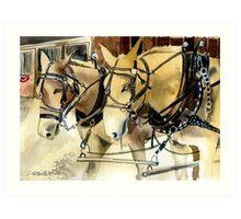 Mules In Harness Horse Portrait Art Print