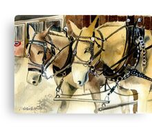 Mules In Harness Horse Portrait Canvas Print