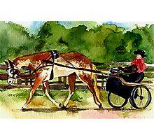 Paint Horse Pleasure Driving Class Portrait Photographic Print