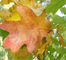 Autumnal Leaf by groovygreen