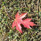 Firey Leaf by groovygreen