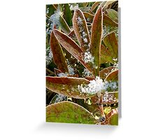 Peonies in a Freeze Greeting Card