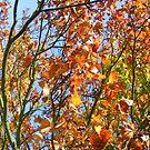 Vibrance by groovygreen