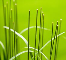 Symmetry in the Grass by Marilyn Cornwell