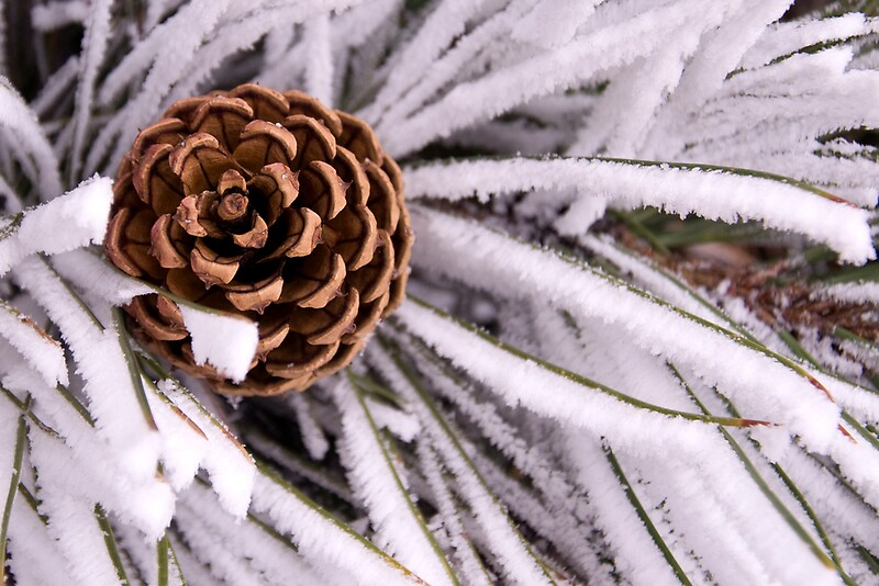 """pine cone"""" by punchdrunklove 