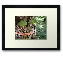 Outer Layer Framed Print