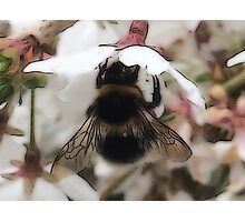 Busy Bee (Close Up) Photographic Print