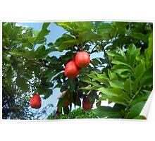 Fruit Triplet Poster