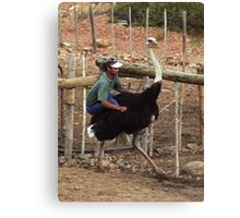 Ostrich Riding - Oudtshoorn, South Africa Canvas Print