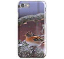 Bramblings in the snow iPhone Case/Skin