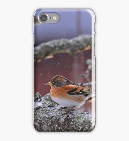 Bramblings in the snow iPhone Case/Skin