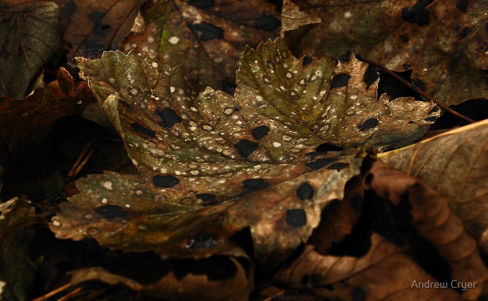 Fallen Leaf by Andrew Cryer