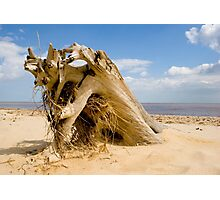 From the sands of time! Photographic Print