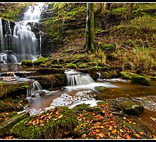 Autumn at Scaleber Force  by Shaun Whiteman