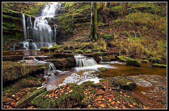 Autumn at Scaleber Force  by Shaun Whiteman
