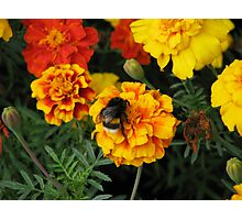 Colorful Marigolds Photographic Print