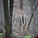 Deer Looks in Ravine by Thomas Murphy