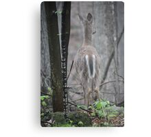 Deer Looks in Ravine Metal Print