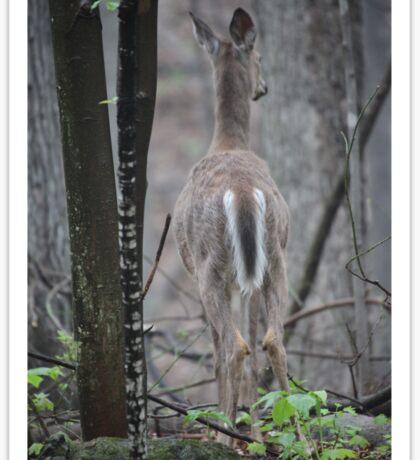 Deer Looks in Ravine Sticker