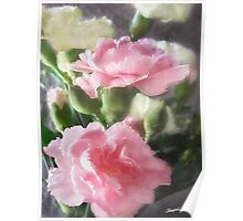 Pink and White Carnations 1 Poster