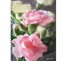 Pink and White Carnations 1 Photographic Print
