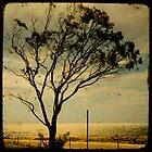 lonely tree three by Sonia de Macedo-Stewart
