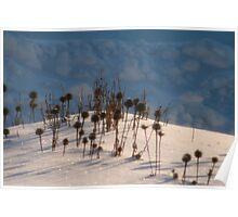 My Snow Garden Poster