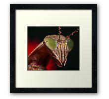 2009 Mantis - #5 Framed Print