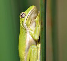 Frog by Jim Jankowski