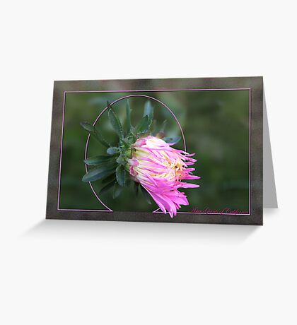 Aster Giants of California Greeting Card