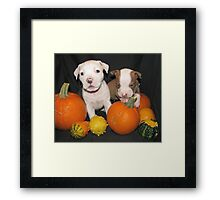 He Said He Will Share! Framed Print
