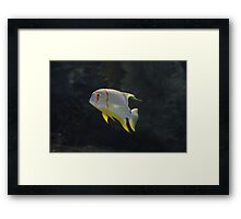 School Of One Framed Print