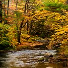 Autumn Stream by Monica M. Scanlan