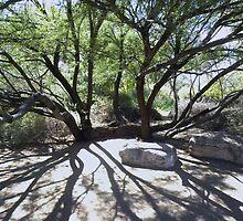 The Sprawling Mesquite by ChuckCheatham